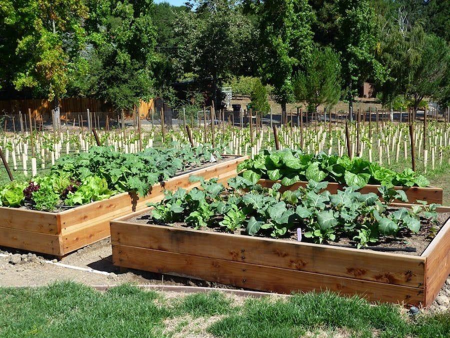 Как сделать лучше свой огород