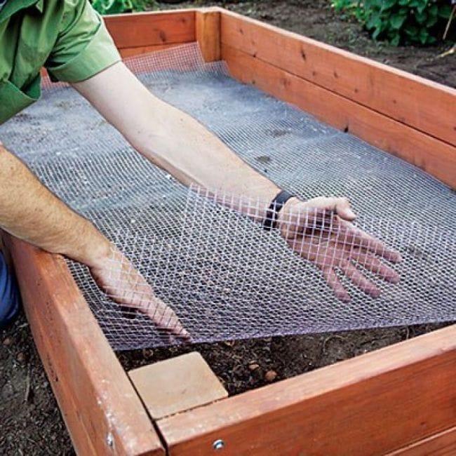 Посадка растений в короб-парник сделанный своими руками