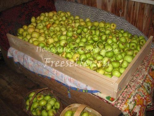 Разборный полуящик для хранения яблок своими руками