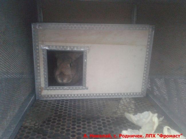 Маточник для крольчих