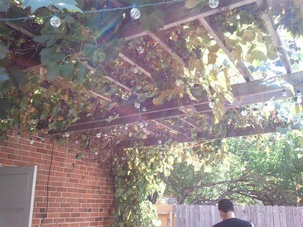 Пресс для отжима  винограда