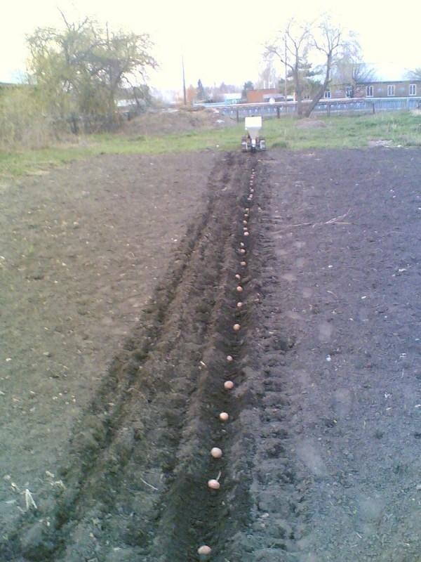 Картофелесажалка-навеска для мотоблока