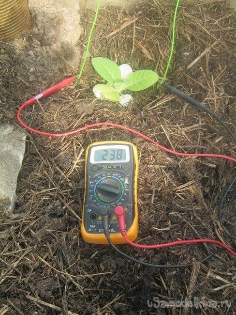 Опыт стимуляции растений электричеством и прибор для него