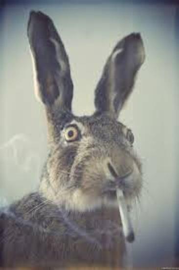 Гуманная ловушка на зайца/кролика
