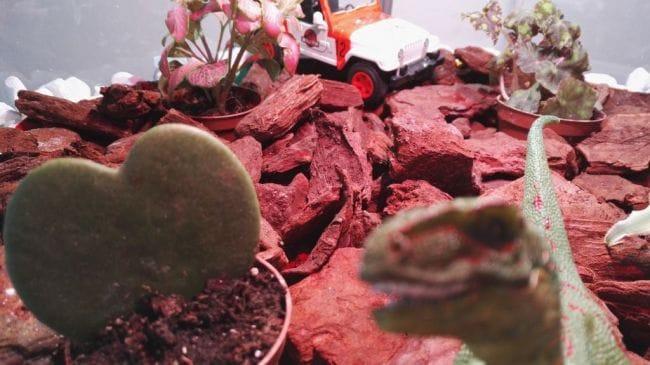 Теплица для тропических растений