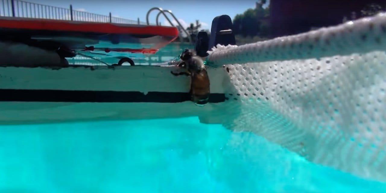 Лодка-робот, очиститель бассейна