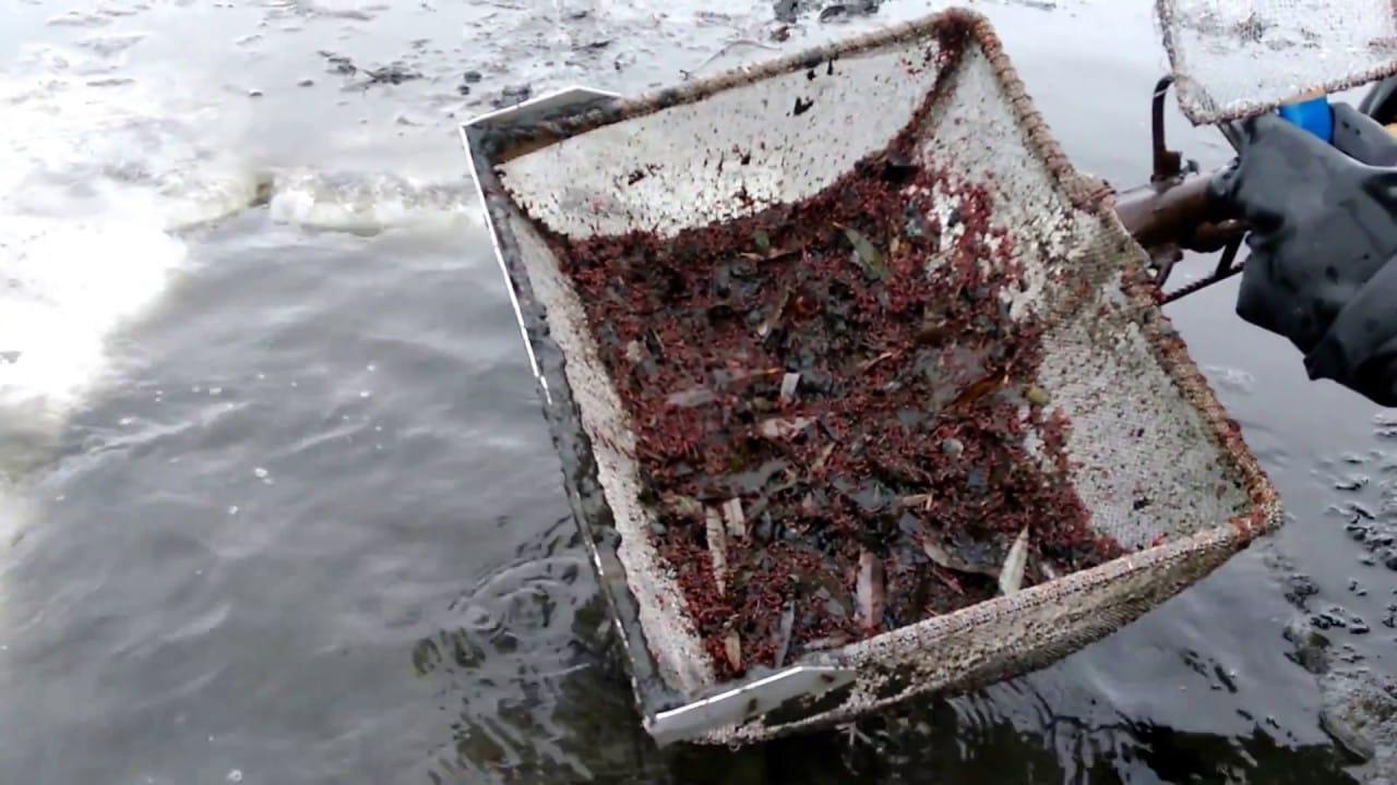 Где найти мотыля для рыбалки