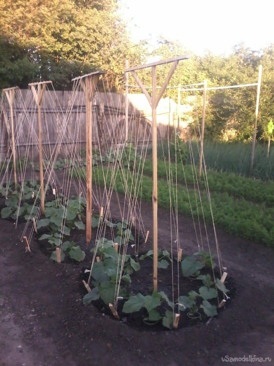 Приспособление для активного роста огурцов