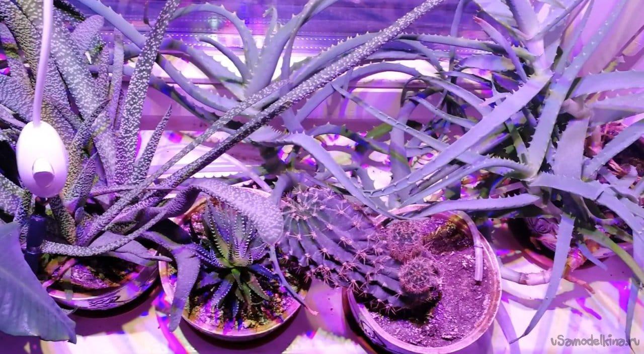 Фитосветильник для растений на светодиодных матрицах