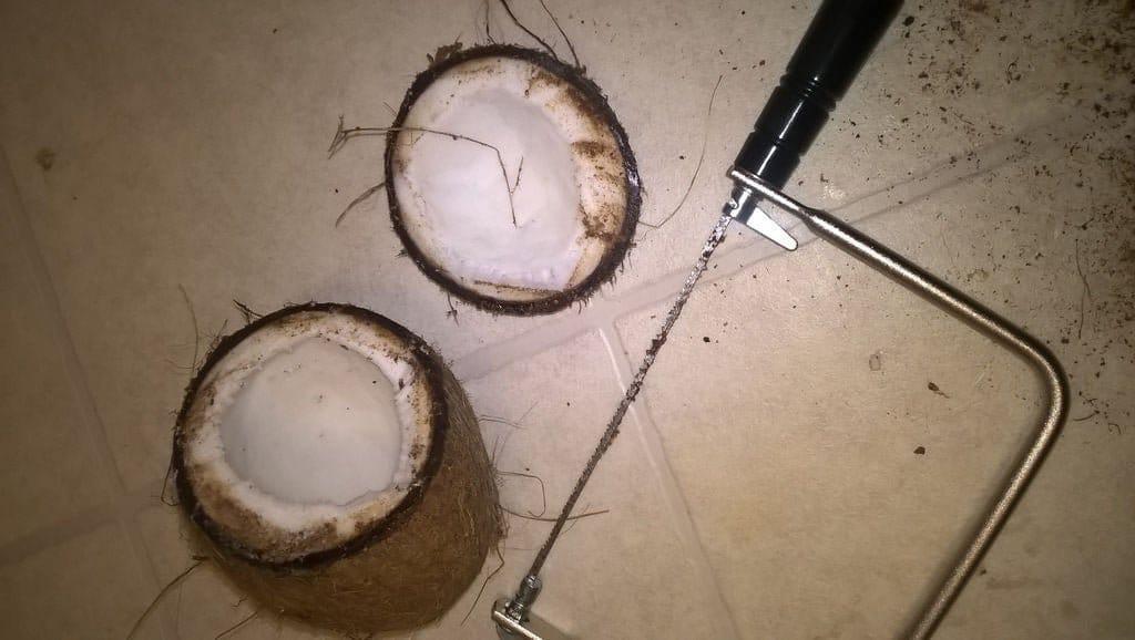 Активная колонка в скорлупе от кокосового ореха